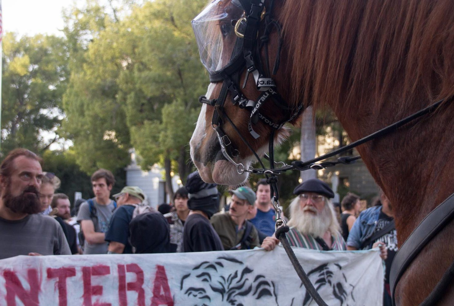 "During a ""Turn California Red"" conservative rally at the Sacramento Capital, mounted police horses wear eye protection while pushing back counter-protestors on Nov. 4, 2018. (Photo by Patrick Hyun Wilson)"