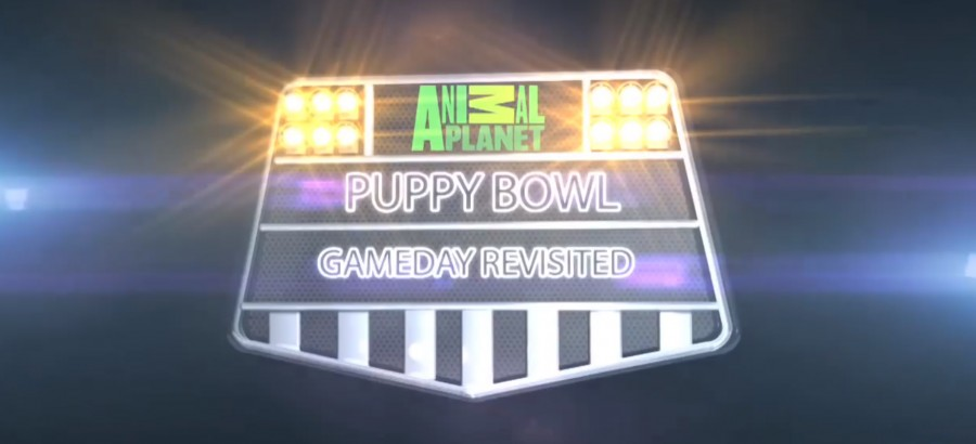 Battle of the Bowls: Puppies and Kittens face off on Super Bowl Sunday