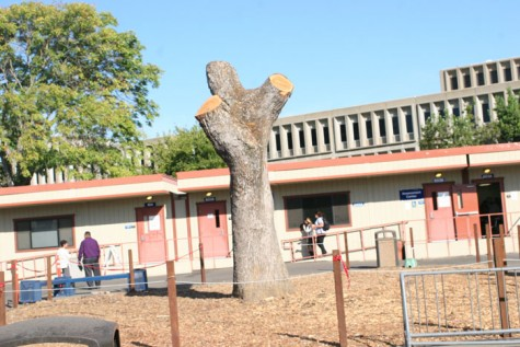 ARC seeks home for Heritage Oak wood