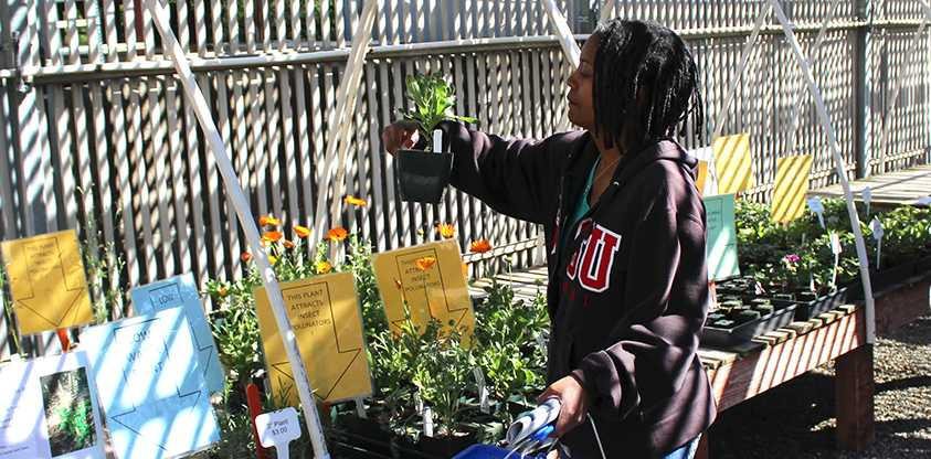 Nicole Gruggs an Intrum Administrative assistant examines a plant during a plant sale hosted by the horticulture department.