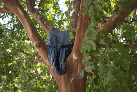 Photo of the Day: A pair of men's underwear was seen hanging from a tree branch beside the Liberal Arts building on Aug. 25.  (Photo by Matthew Peirson)