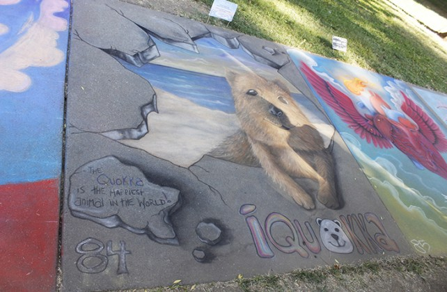 A chalk depiction of a Quokka at Chalk It Up's 25th annual art festival on Labor Day weekend in Fremont park, downtown Sacramento. Quokka's are a small macropod about the size of a domestic cat. (Photo by Cheyenne Drury)