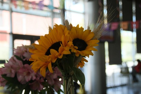 Sunflowers were among the plants for sale during the horticulture's floral sale on Oct. 15, 2015. Prices ranged from $2 to $19. (photo by Kevin Sheridan)
