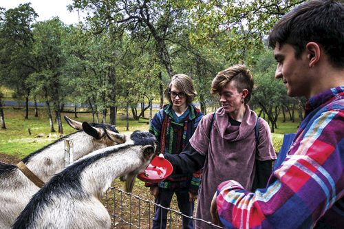 Justin Carter (left), Bryce Mondul (center), and Georgio Klironomos feed some of the goats on Klironomos' ranch in Placervile, California on Oct. 27, 2016. (Photo by Luis Gael Jimenez)