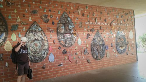 A student stands next to a ceramic mosaic wall in the biological sciences hallway at American River College in Sacramento, California on Sept. 12, 2017. (Photo by Nathan Bauer)