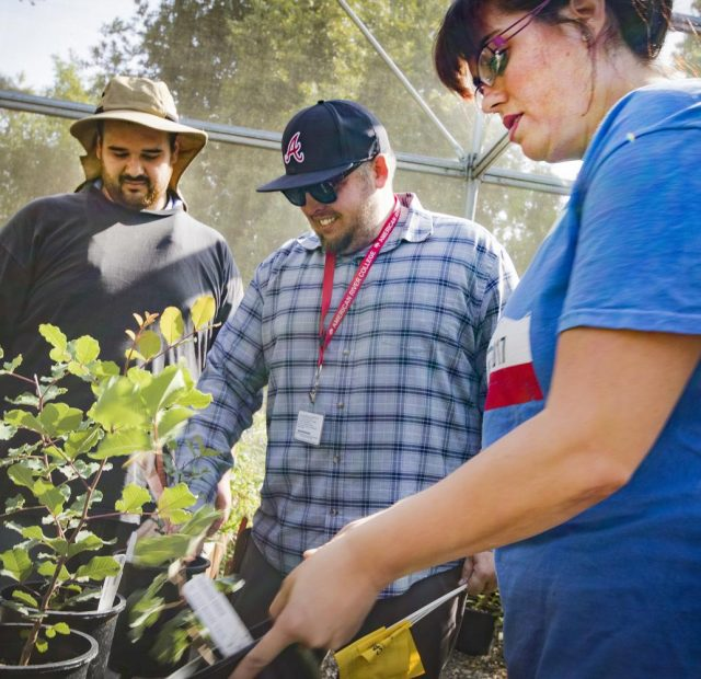 Professor Codd explains to his students the benefits of different plant species in the Horticulture Department at American River College on Oct. 10, 2017.