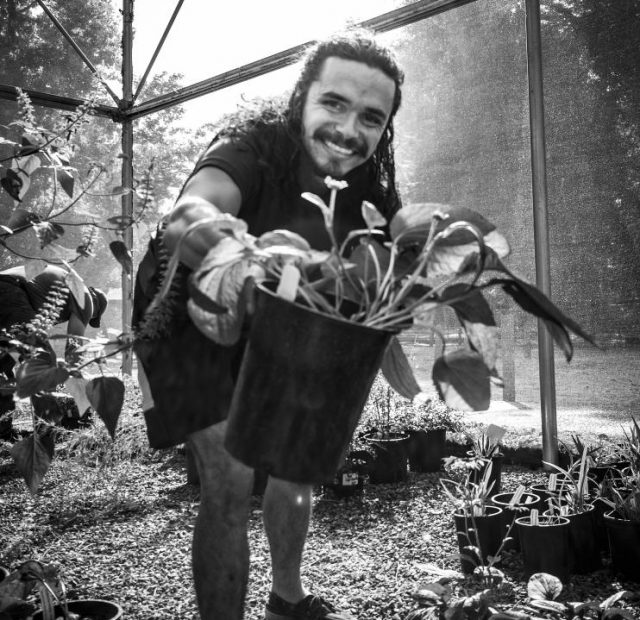 Garry Elson hold up a tree aeonium  in the Horticulture Department at American River College on Oct. 10, 2017.