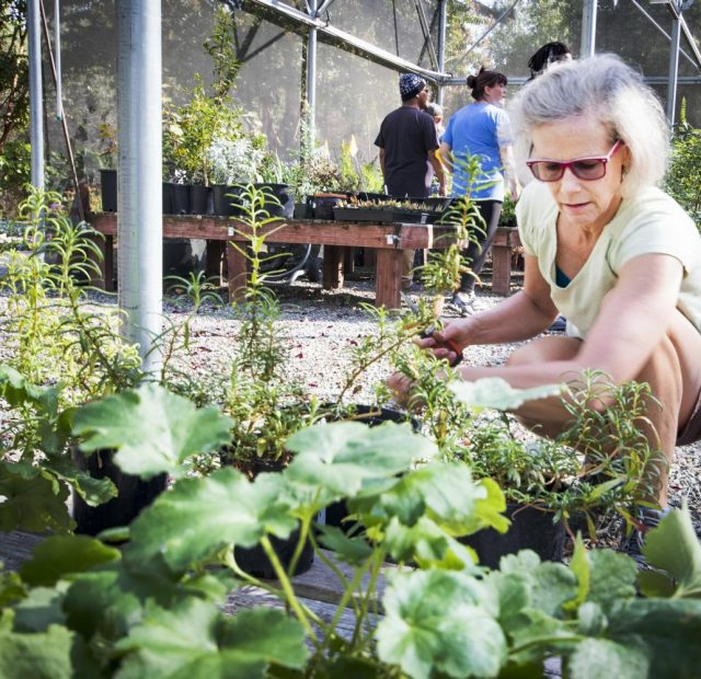 Marianne Calhoun starts pruning the plants in Horticulture Department at American River College on Oct. 10, 2017.