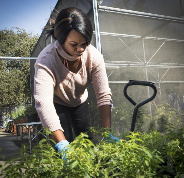 Scharda Green starts organizing one of the many plants that will be sold at the plant sale in the Horticulture Department at American River College on Oct. 10 2017.