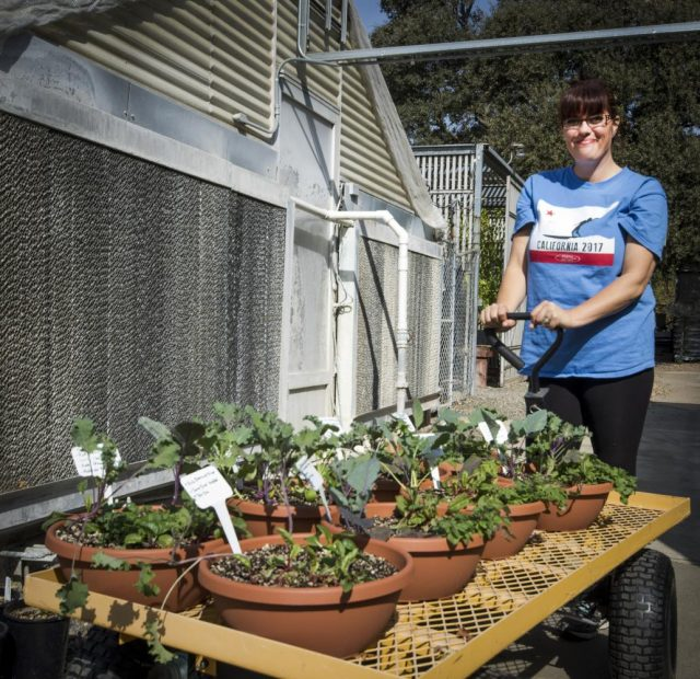 Sarah O'niel is pulling a wagon full of different spices such as swiss chard, oregano, and par choy in the Horticulture Department at American River College on Oct. 10, 2017.