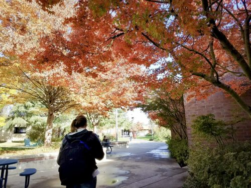 A student walks through a canopy of trees at American River College on Nov. 27, 2017. (photo by Ashley Hayes-Stone)