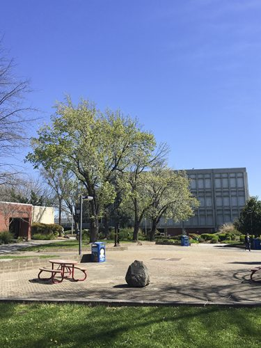 The quad area behind the library at American River College sits mostly quiet on March 19. (Photo by Gabe Carlos)