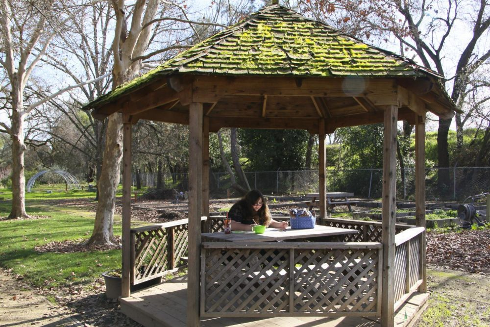 Natural Resources major Angela Davidson draws under the gazebo in the Horticulture Department at American River College on Jan. 27, 2020. (Photo by Joshua Ghiorso)